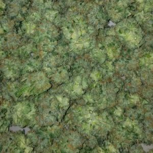 Buy Sunset Sherbert online Buy Sunset Sherbert Queensland Buy cannabis online UK Buy marijuana online Perth Buy weed online Italy.. SHOP NOW TOP STRAINS