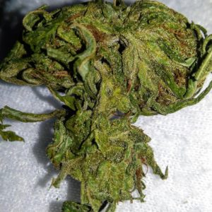 Buy Kali Dog weed in USA Order Kali Dog in England Buy cheap marijuana with card Looking to buy cheap weed in Uk Best online worldwide weed delivery site