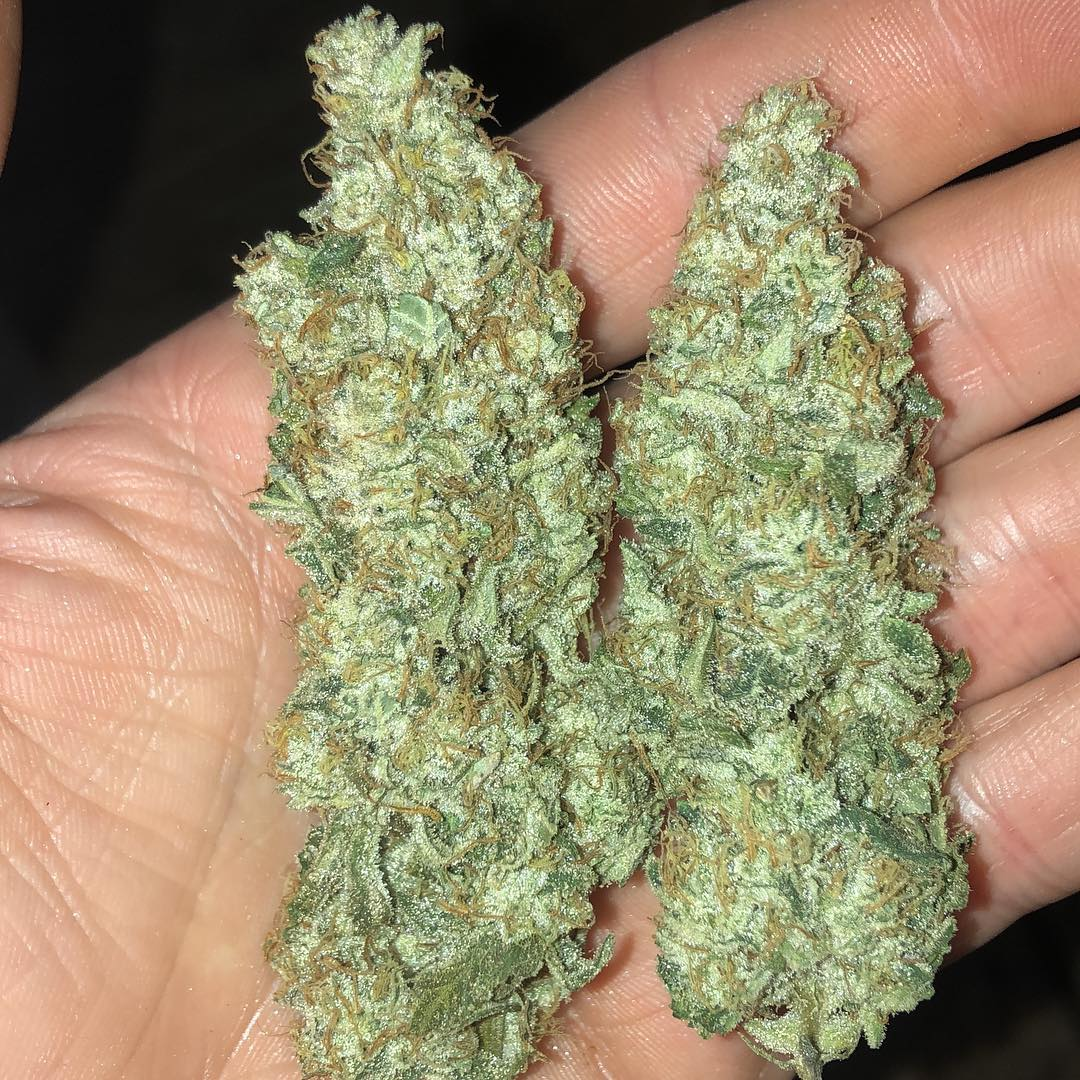 Buy Durban Poison