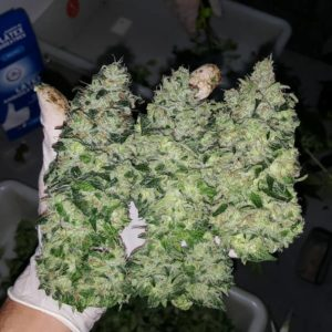 comprare erba italia Buy Gorilla Glue 4 online australia