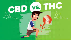 THC, CBD, and PAIN: Finding the Perfect Strain for Your Pain Relief