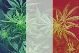 Buy Cannabis Online France