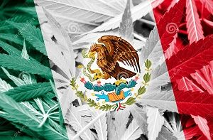 where to buy weed in Leon Mexico