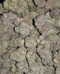Buy Northern Lights Kush Online This strain is a pure indica strain with knockout effects. We do grow and ship this strain, our delivery is 100% safe.